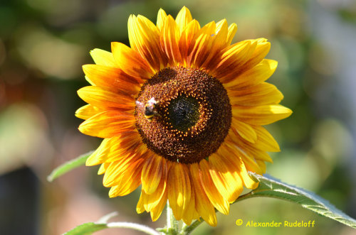 DSC_5008-Blumen-3