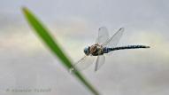 Foto-76e-(36)-Tag-der-Libelle