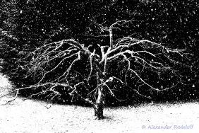 Foto-78c-(73)b-Bonsai