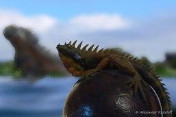 Foto-80d-(12)-Galapagos