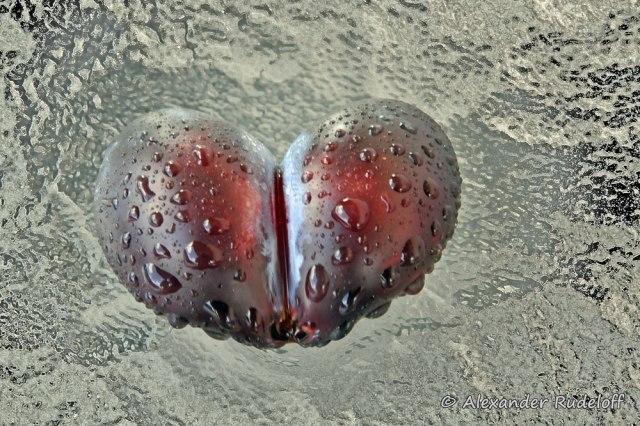 Foto-81d-(21)-Herzfrucht