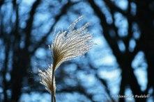 foto-83b-(04)-symphonie