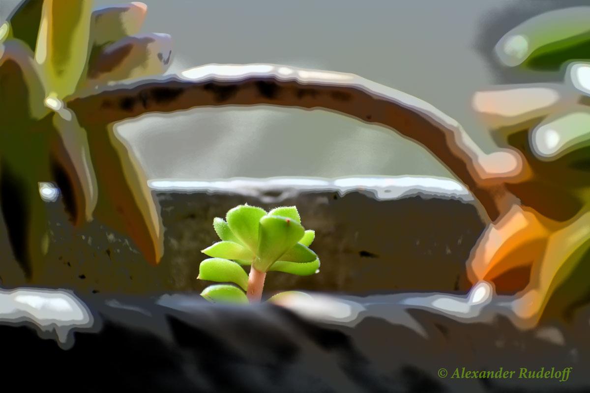 Foto-NA-01-(441)-Kleinkunst